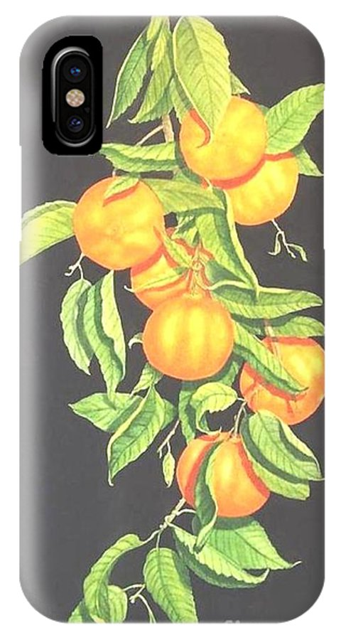 Realism Still Life Mandarine Oranges Watercolor IPhone X Case featuring the painting Lemon Mandarine Suite by Janet Summers-Tembeli