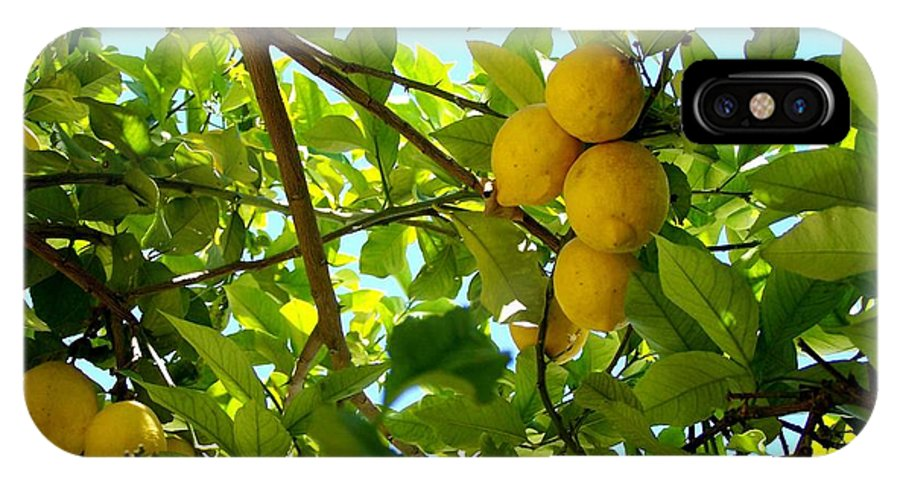 Lemons IPhone X Case featuring the photograph Lemon Tree by Christopher Rowlands