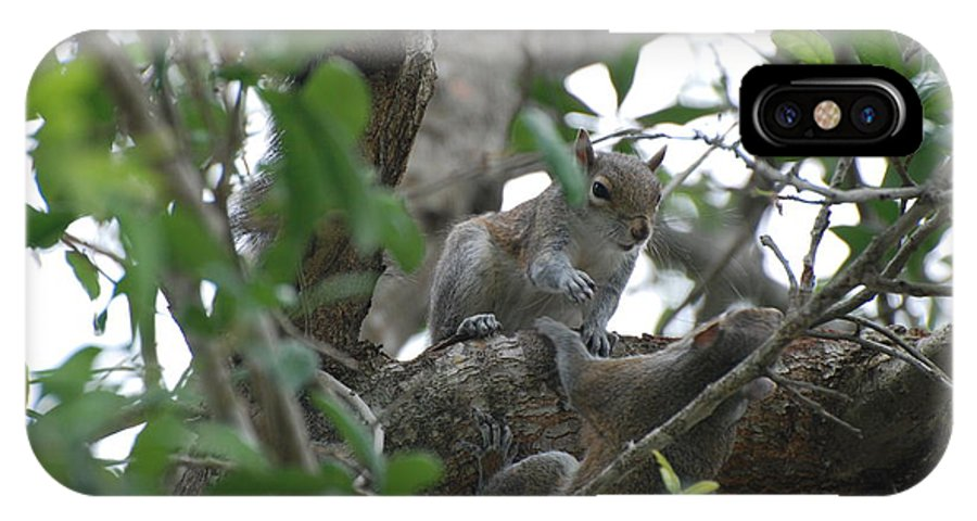 Squirrel IPhone X Case featuring the photograph Lending A Helping Hand by Rob Hans