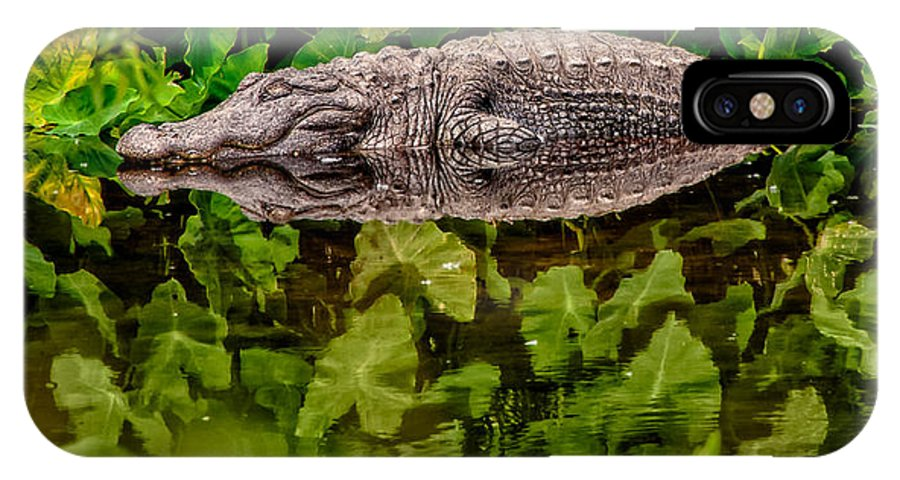 Alligator IPhone X Case featuring the photograph Let Sleeping Gators Lie by Christopher Holmes