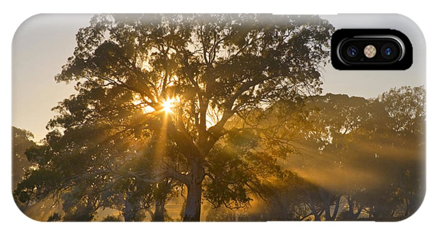 Tree IPhone Case featuring the photograph Let There Be Light by Mike Dawson