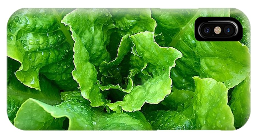 Ume IPhone X Case featuring the photograph Lettuce by Bri Lou