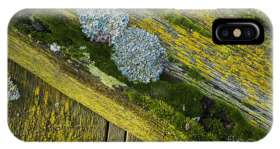 Lichen IPhone X Case featuring the photograph Lichen On Wood. by John Cox