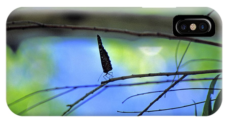 Butterfly IPhone X Case featuring the photograph Life On The Edge by Randy Oberg