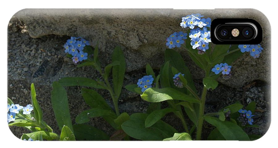Forget-me-nots IPhone Case featuring the photograph Life Will Prevail by Anna Lisa Yoder