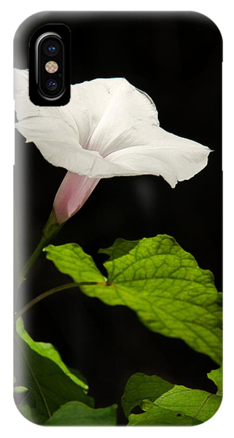 Flower IPhone X Case featuring the photograph Light Out Of The Dark by Christopher Holmes
