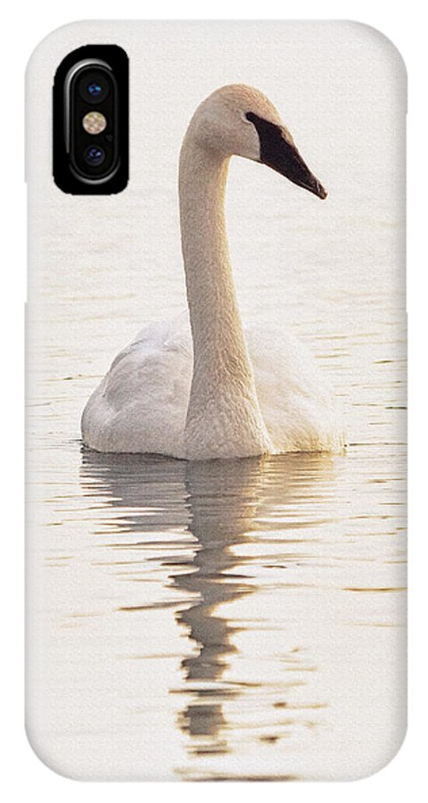 Trumpeter Swan IPhone X Case featuring the photograph Light Swimmer C by Theo O'Connor