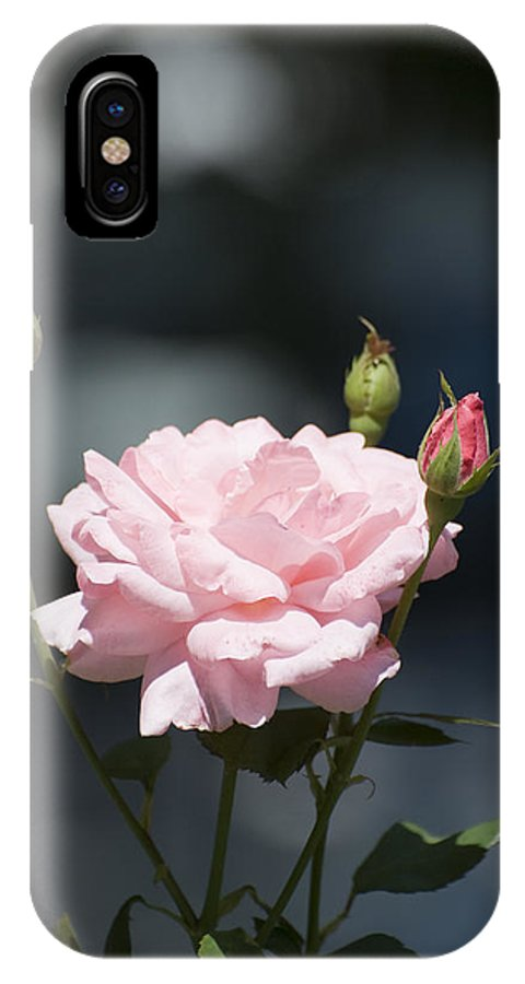 Rose IPhone Case featuring the photograph Like A Rose by Adrian Bud