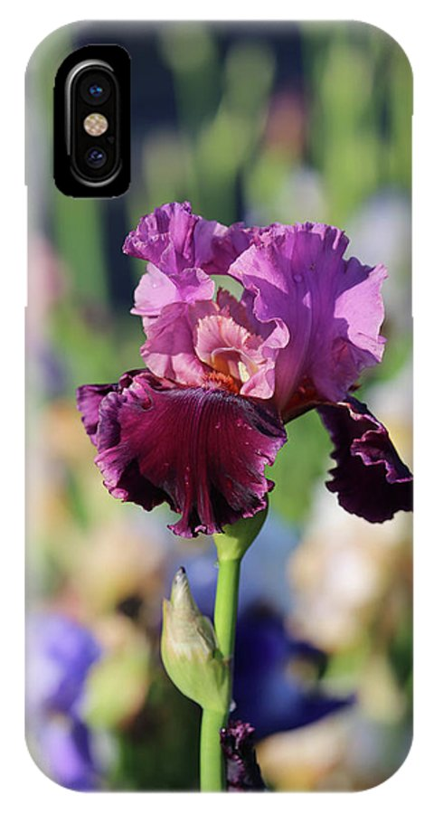 Lavendar IPhone X / XS Case featuring the photograph Lilac Iris In Bloom by Theresa Campbell