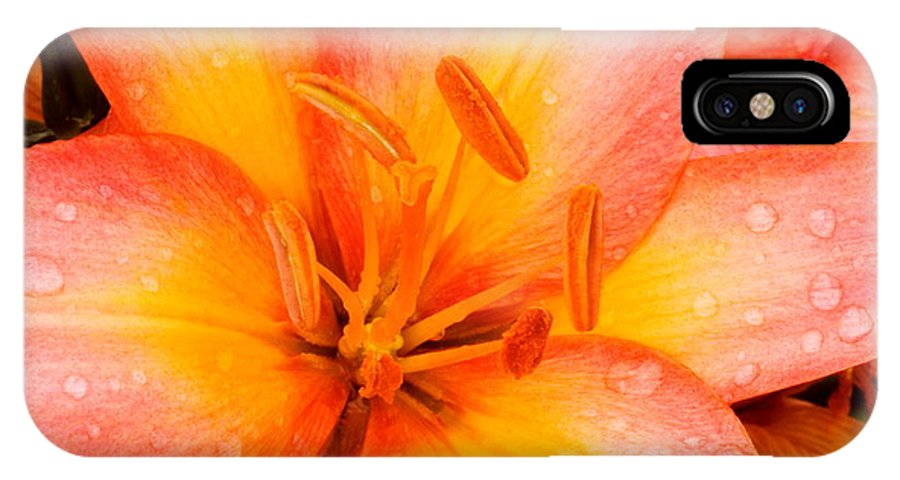 Lily IPhone X Case featuring the photograph Lily by Amanda Kiplinger