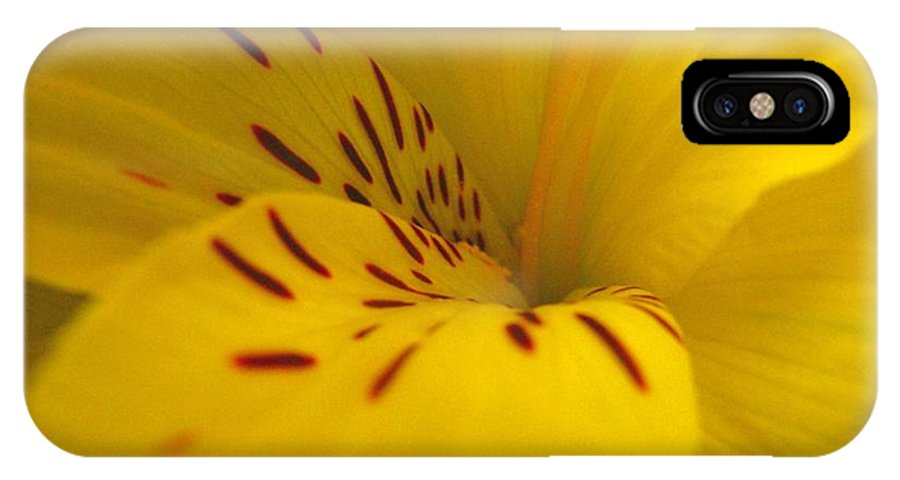 Yellow IPhone Case featuring the photograph Lily by Rhonda Barrett