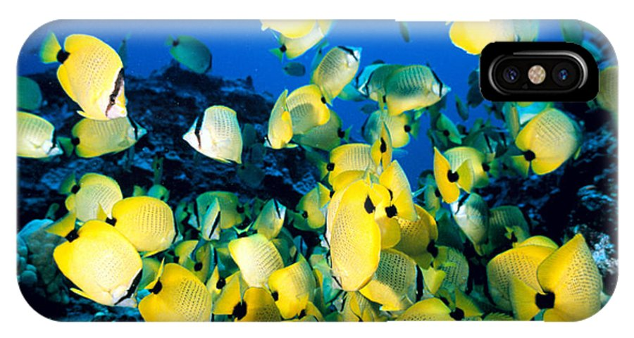 Animal Art IPhone X Case featuring the photograph Lined Butterflyfish by Bob Abraham - Printscapes