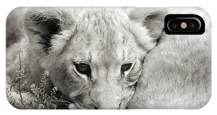 Lion IPhone X Case featuring the photograph Lion Cub by Marilyn Hunt