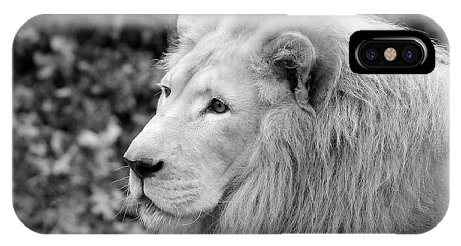 IPhone X Case featuring the photograph Lion Oh My by Michelle Stephenson