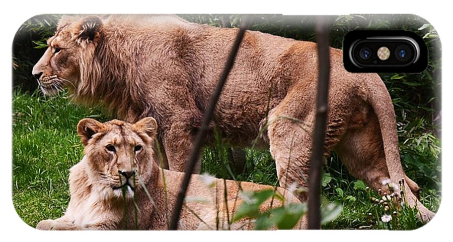 Lions IPhone X Case featuring the photograph Lions by Johnny Griffin