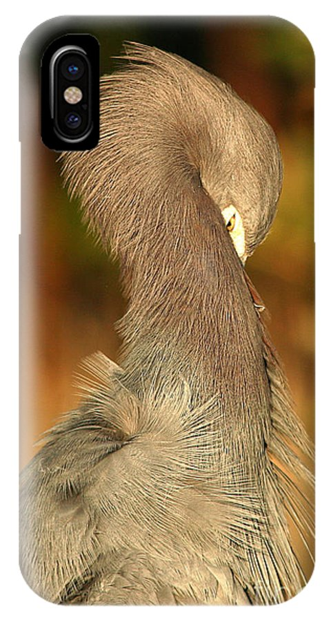 Heron IPhone X Case featuring the photograph Little Blue Heron Feeling Bashful by Max Allen