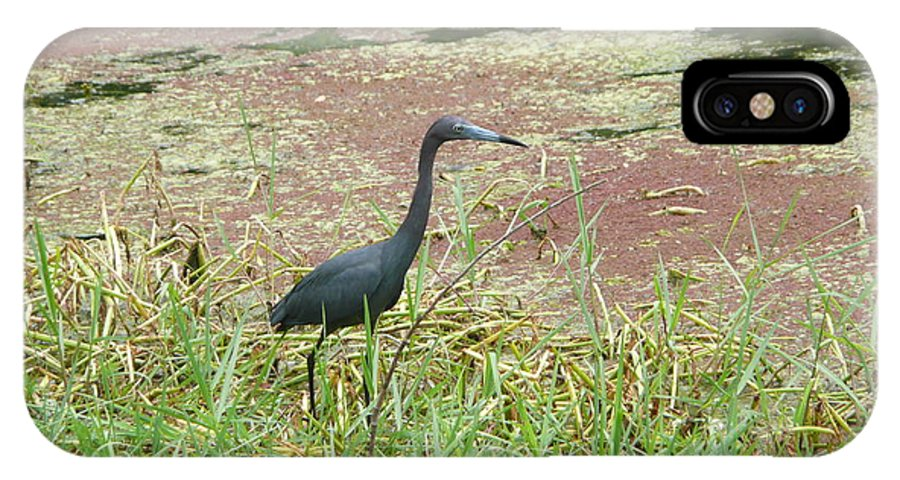Nature IPhone X Case featuring the photograph Little Blue Heron by Kathy Schumann