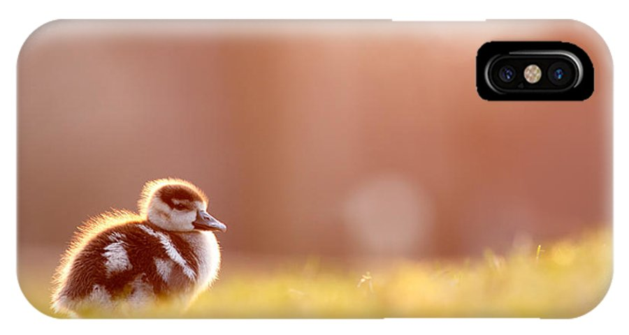 Egyptian Goose IPhone X Case featuring the photograph Little Furry Animal - Gosling In Warm Light by Roeselien Raimond