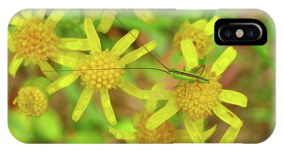 Flowers IPhone X Case featuring the photograph Little Grasshopper by Donna Brown