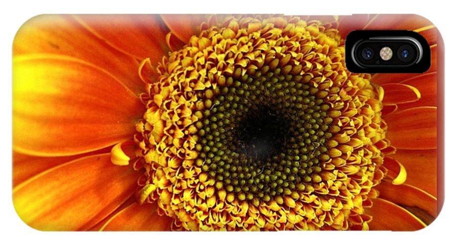 Flower IPhone X Case featuring the photograph Little Sun by Rhonda Barrett