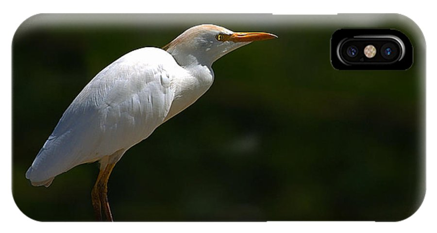 Little IPhone X Case featuring the photograph Little White Heron by Galeria Trompiz