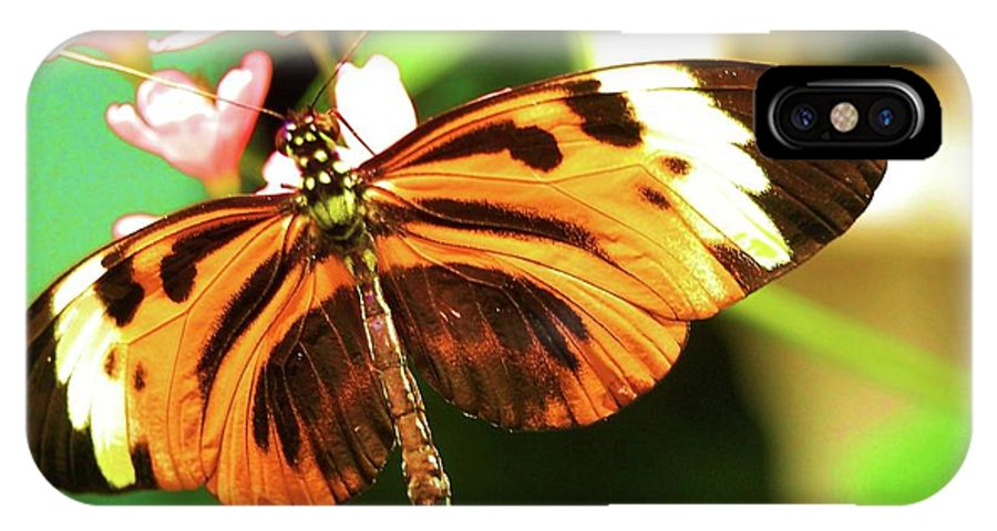 Butterfly IPhone X Case featuring the photograph Little Wing by Debbi Granruth