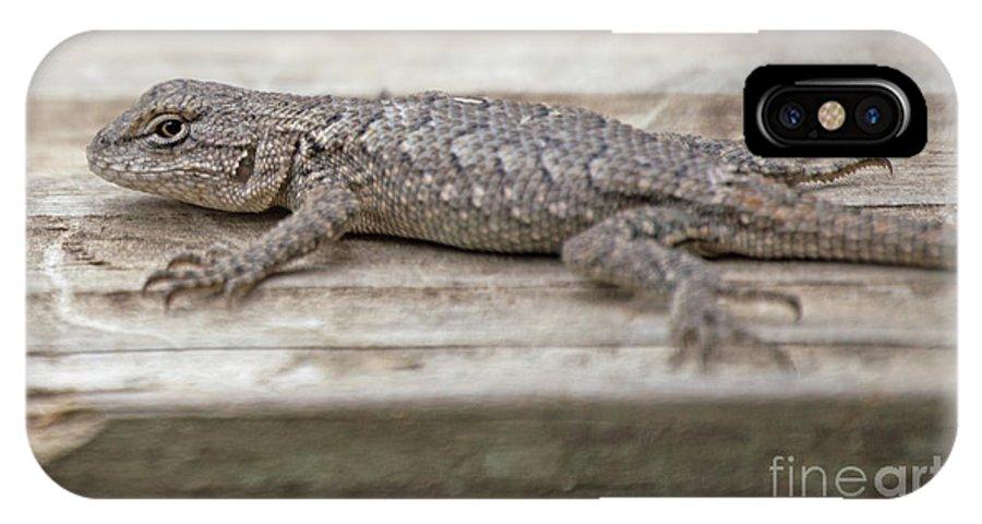 Lizard IPhone X Case featuring the photograph Lizard On Deck by Diane Friend