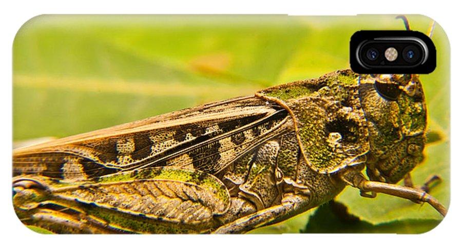 Locust IPhone X Case featuring the photograph Locust In Green by Douglas Barnett