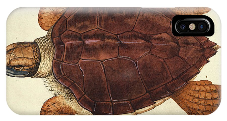 1585 IPhone X Case featuring the photograph Loggerhead Turtle, 1585 by Granger