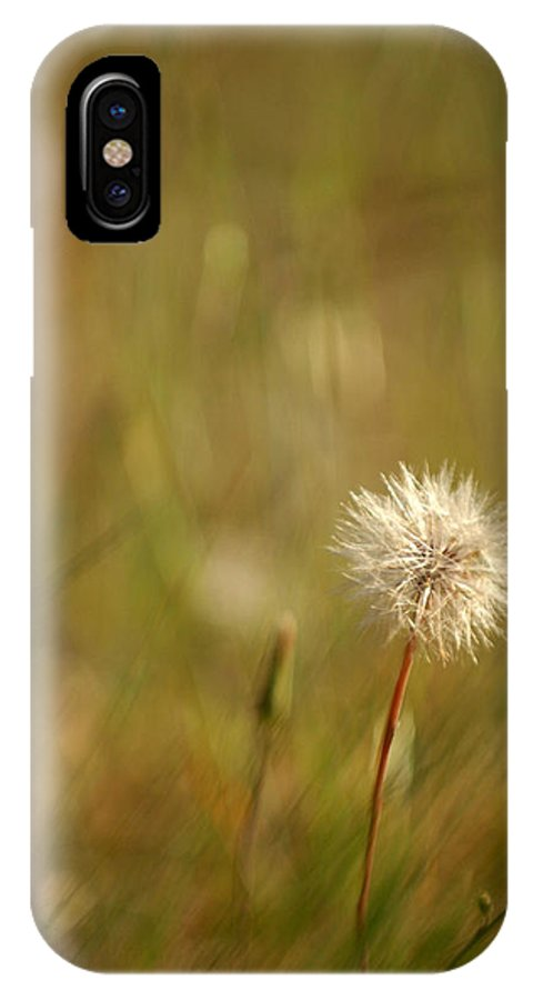 Dandelion Flower Wildflower Nature Botanical IPhone X Case featuring the photograph Lone Dandelion 2 by Jill Reger