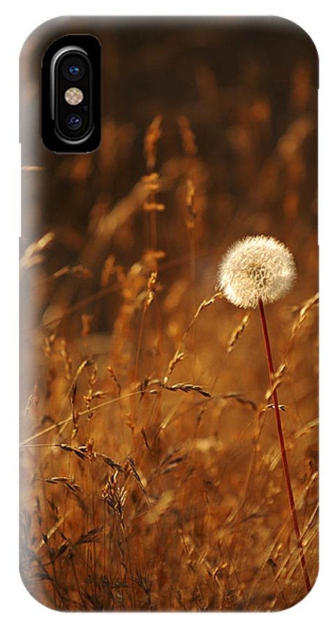 Nature Outdoors Field Dandelion Alone Single Sole Botanical IPhone X Case featuring the photograph Lone Dandelion by Jill Reger