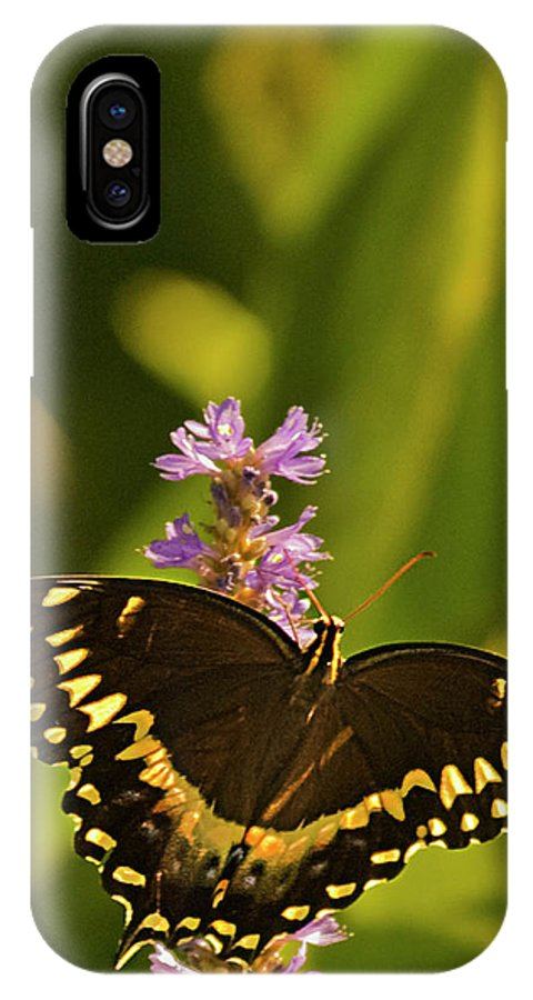 Monarch Butterflies IPhone X Case featuring the photograph Lone Monarch by Frank Feliciano