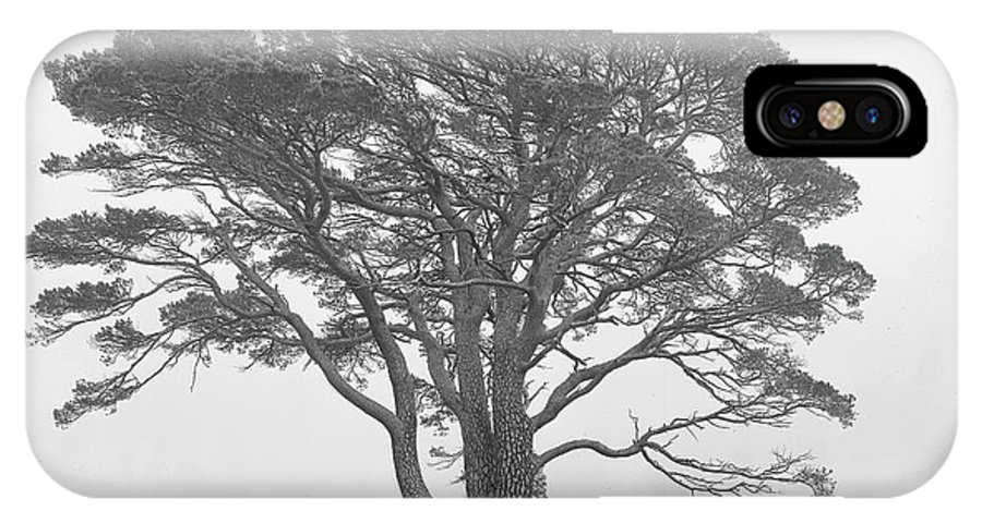 IPhone X Case featuring the photograph Lone Scots Pine, Crannoch Woods by Iain Duncan