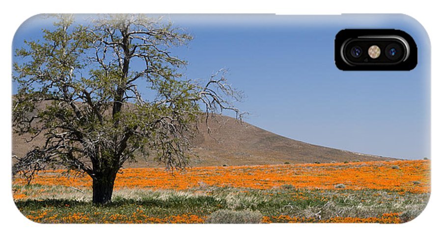 Poppies IPhone X Case featuring the photograph Lone Tree In The Poppies by Sandra Bronstein