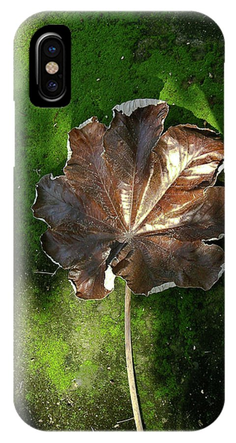 Lonely IPhone X Case featuring the photograph Lonely Leaf On Moss by Douglas Barnett