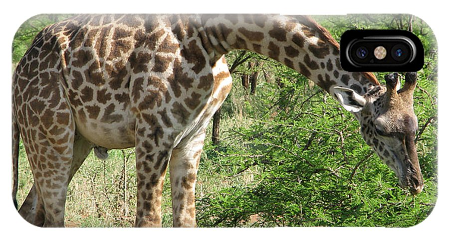 Giraffe IPhone X Case featuring the photograph Long Neck by Diane Barone