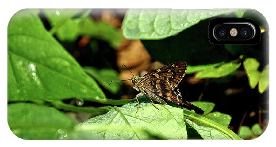 Animal IPhone X Case featuring the photograph Long Tail Skipper Butterfly 1 by John Trommer