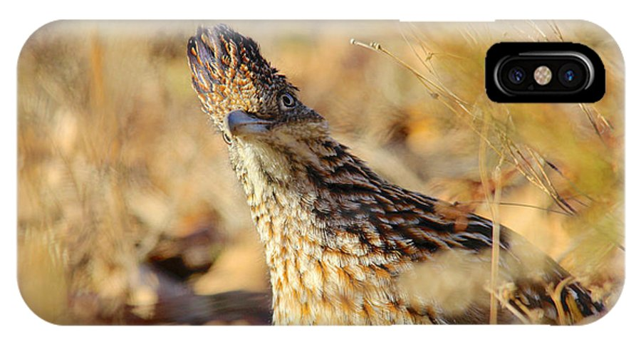 Cuckoo IPhone X / XS Case featuring the photograph Looking A Little Cuckoo by Carolyn Wright