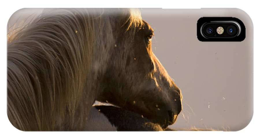 Horse IPhone X Case featuring the photograph Looking At The Sunset by Angel Ciesniarska