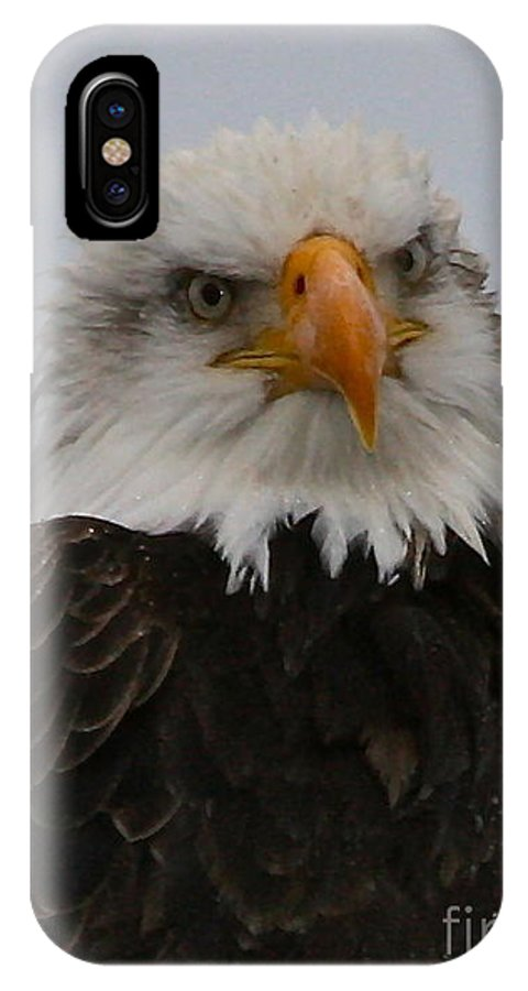 Eagle IPhone X Case featuring the photograph Looking At You by Rick Monyahan