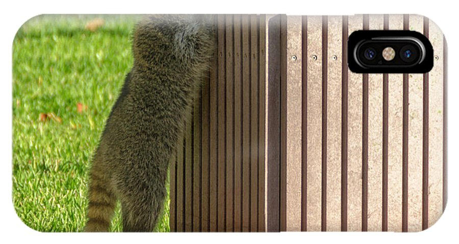 Raccoon IPhone X Case featuring the photograph Looking For Dinner by Wolfgang Stocker
