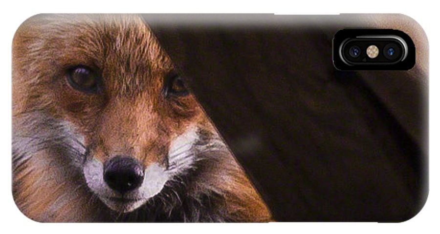 Red Fox Virginia IPhone X / XS Case featuring the photograph Looking Through The Woodpile by Mark Stephens