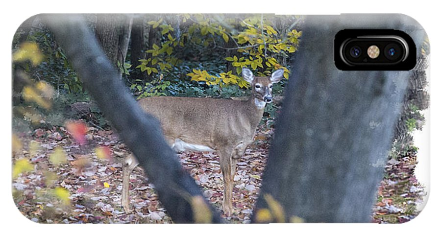 White Tail Deer Fall Tree Landscape IPhone X / XS Case featuring the photograph Looking Thru The Trees by Mark Stephens