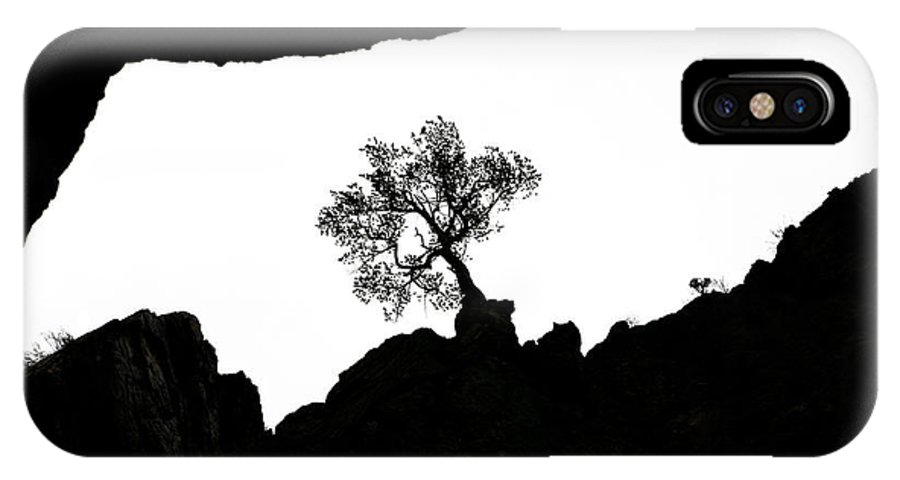 Tree IPhone X Case featuring the photograph Looking Up 2 by Marilyn Hunt