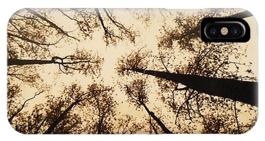 Trees IPhone Case featuring the photograph Looking Up by Jack Paolini