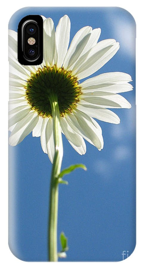 Daisy IPhone Case featuring the photograph Looking Up by Idaho Scenic Images Linda Lantzy