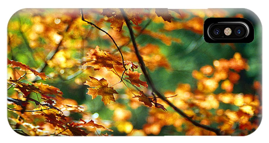 Fall Color IPhone X Case featuring the photograph Lost In Leaves by Kathy McClure