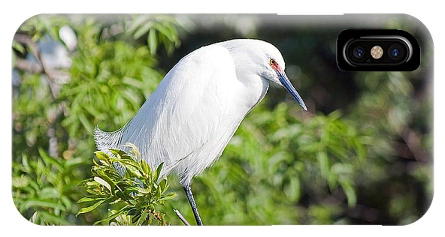 Egret IPhone X Case featuring the photograph Lost In Thought by Kenneth Albin