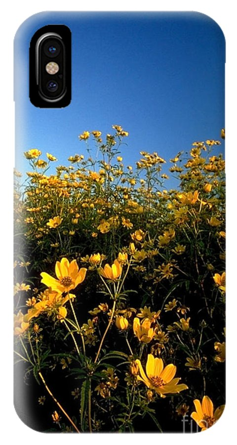 Buttercups IPhone X Case featuring the photograph Lots of Buttercups against a blue sky by Sven Brogren