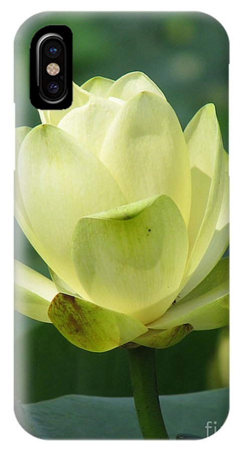 Lotus IPhone X Case featuring the photograph Lotus by Amanda Barcon